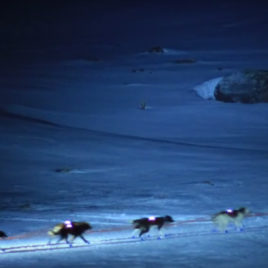 Mushing nocturno  Andorra Mushing, paseo nocturno 4 km Mushing night 268x268