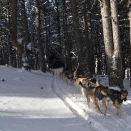 Mushing Andorra: Paseo 2 km Adulto  Mushing Andorra: Paseo 2 km Adulto DSC 0069 268x268