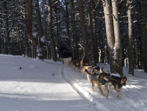 Mushing Andorra: Paseo 2 km Adulto DSC 0069 500x380