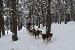 Perros de trineo Andorra  Mushing – Adulto Paseo 3.5 km DSC 0277 300x199