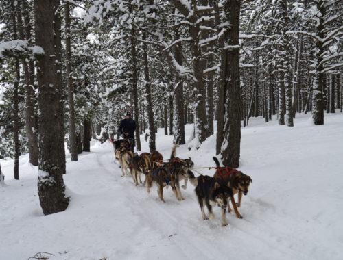 Perros de trineo Andorra  Mushing – Adulto Paseo 3.5 km DSC 0277 500x380