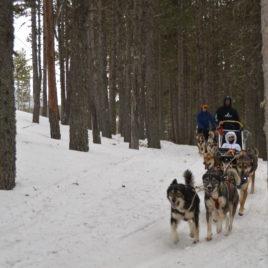 Mushing Pirineus  Mushing Andorra: Pack 2 personas Paseo y Conducción 30 min DSC 0511 268x268