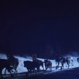 Andorra aventura perros de trineo  Andorra Mushing paseo nocturno 6 km mushing night 2 268x268