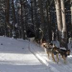 Mushing Andorra: Paseo 2 km Adulto DSC 0069 150x150