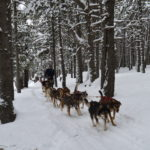 Perros de trineo Andorra  Mushing – Adulto Paseo 3.5 km DSC 0277 150x150