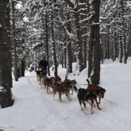 Perros de trineo Andorra  Mushing – Adulto Paseo 3.5 km DSC 0277 268x268