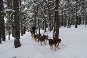 Perros de trineo Andorra  Mushing Andorra: Paseo 2 km Infantil DSC 0277 300x199