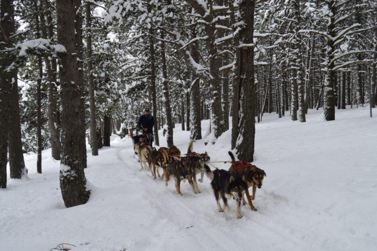 Perros de trineo - Mushing Andorra