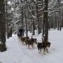 Perros de trineo Andorra