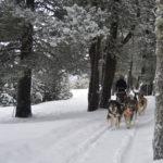 Muixing Andorra  Perros de trineo – Andorra Paseo 5 km DSC 0416 150x150