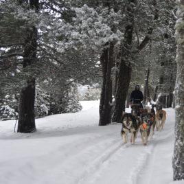 Muixing Andorra  Perros de trineo – Andorra Paseo 5 km DSC 0416 268x268