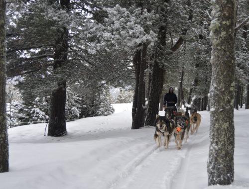 Muixing Andorra  Perros de trineo – Andorra Paseo 5 km DSC 0416 500x380