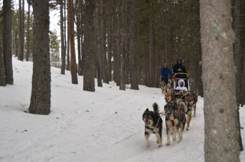 Mushing Pirineus  Mushing Andorra: Pack 2 personas Paseo y Conducción 30 min DSC 0511 500x332