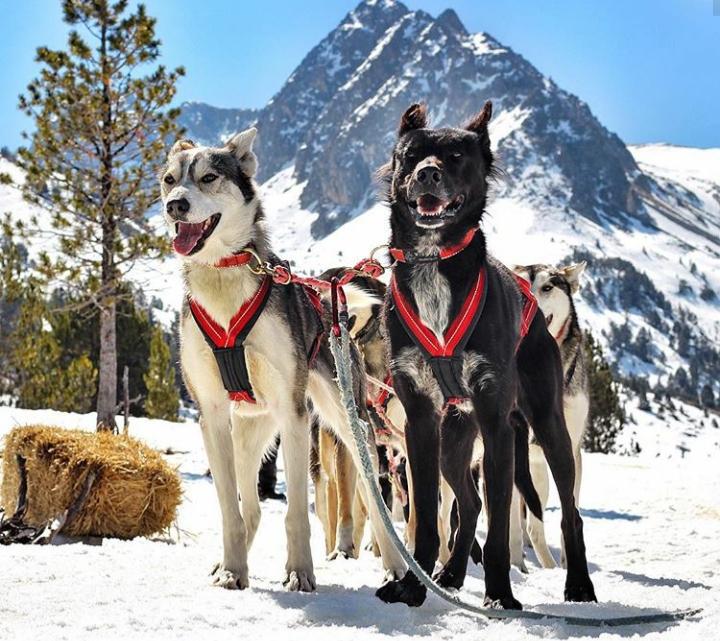 Mushing Aventura con perros de trineo